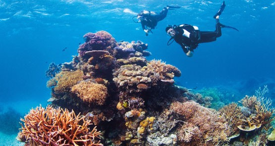 Something's fishy: Carmichael mine faces Great Barrier Reef challenge