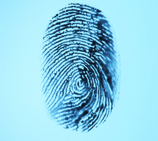 Fingerprints: the Oz's campaign against changes to the Copyright Act